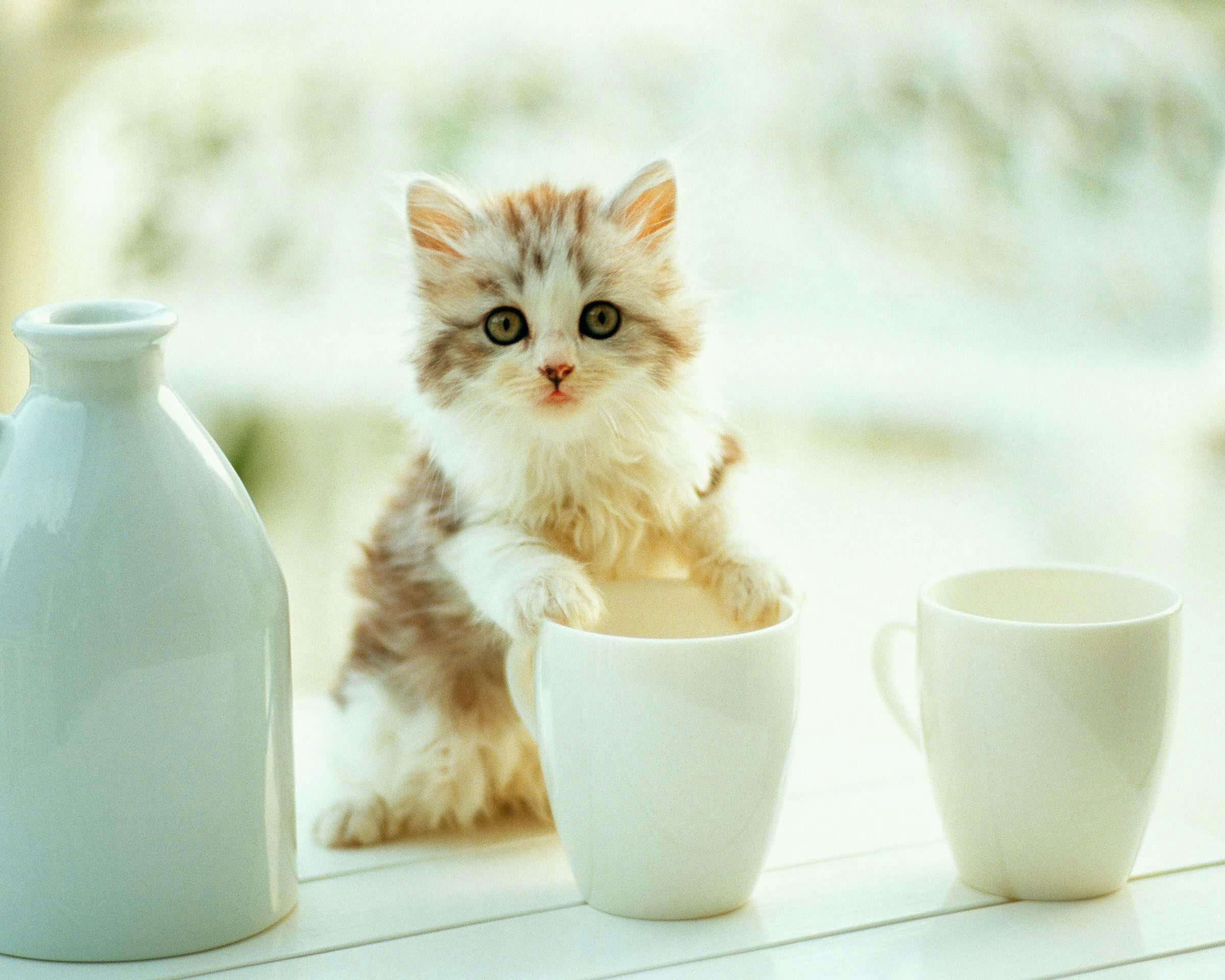 壁纸 动物 猫 猫咪 小猫 桌面 2400_1920