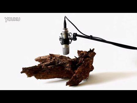 内部25只蛀木虫蚕食木材的声音记录下来并放大数倍