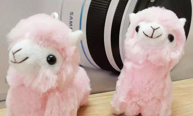 可爱小羊驼 非常柔软的毛色