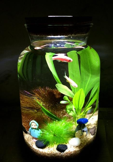 led灯水族生态瓶微景观斗鱼创意家居办公室鱼缸海藻球装修
