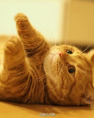 壁纸 动物 猫 猫咪 小猫 桌面 320_400 竖版 竖屏 手机
