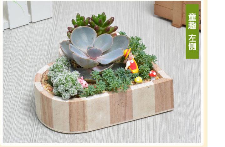 微景观多肉植物组合盆栽套装