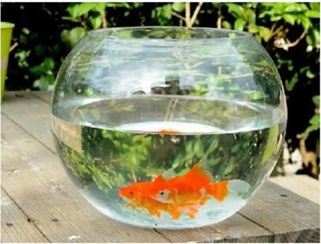 透明圆缸 圆形金鱼缸 生态创意 玻璃鱼缸 金鱼缸水培缸花瓶