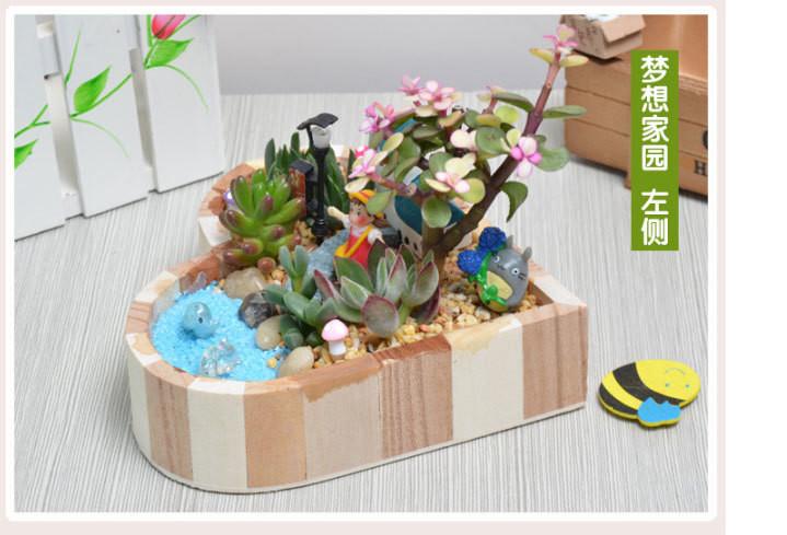 多肉植物组合盆栽套装微景观肉肉桌面绿植送情人男女生日礼品礼物